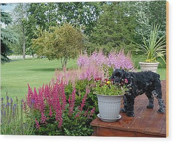 Wood Print featuring the photograph Pup And Flowers by Elaine Franklin