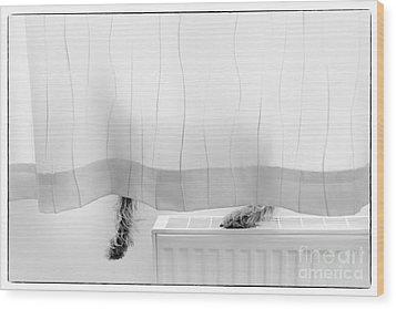 Pup Behind The Curtain Wood Print by Natalie Kinnear