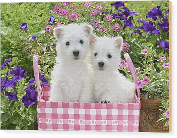 Puppies In A Pink Basket Wood Print by Greg Cuddiford