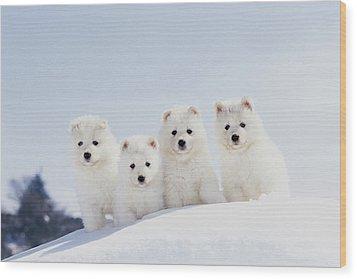 Puppies In Snow Wood Print by Mitsuyoshi  Tatematsu