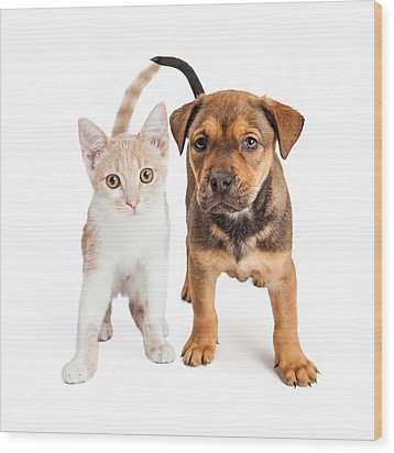 Puppy And Kitten Standing Together Wood Print