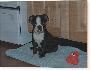 Puppy Boston Terrier And Toy Wood Print