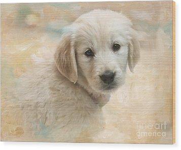 Puppy Eyes Wood Print by Jayne Carney