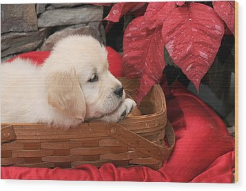 Wood Print featuring the photograph Puppy In A Basket by Paul Miller
