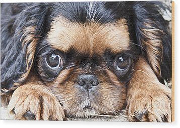 Puppy Love Wood Print by Jeannette Hunt