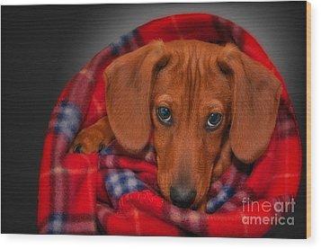 Puppy Love Wood Print by Susan Candelario