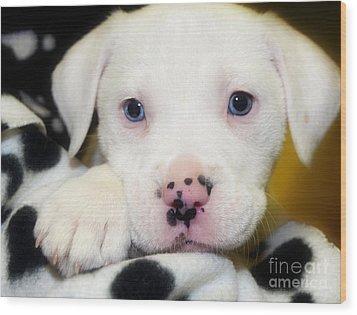 Puppy Pose With 4 Spots On Nose Wood Print by Peggy Franz