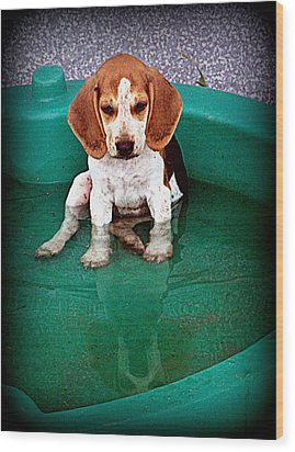Puppy Refection  Wood Print by Lynn Griffin