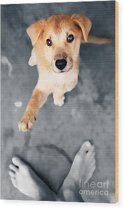 Puppy Saluting Wood Print by William Voon