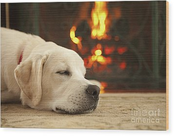 Puppy Sleeping By The Fireplace Wood Print by Diane Diederich