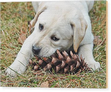 Puppy With Pine Cone Wood Print by Lisa Phillips