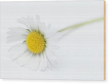 Pure Wood Print by Anne Gilbert