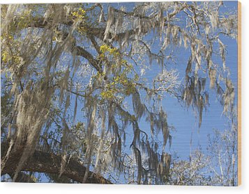 Pure Florida - Spanish Moss Wood Print by Christine Till