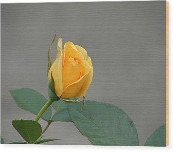 Wood Print featuring the photograph Pure Gold by Lew Davis