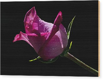 Wood Print featuring the photograph Pure Pink by Doug Norkum