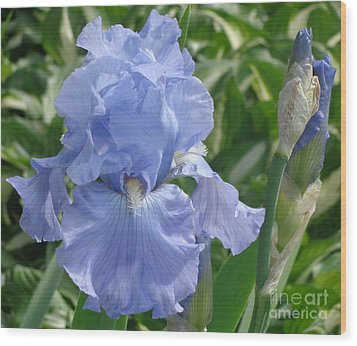 Purely Pretty Iris Wood Print by Christina Verdgeline