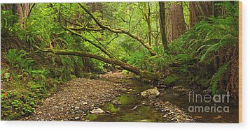 Purisima Creek Wood Print by Matt Tilghman