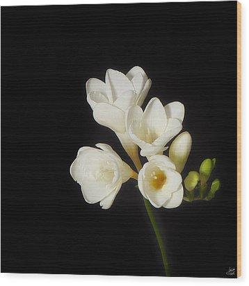 Wood Print featuring the photograph Purity   A White On Black Floral Study by Lisa Knechtel