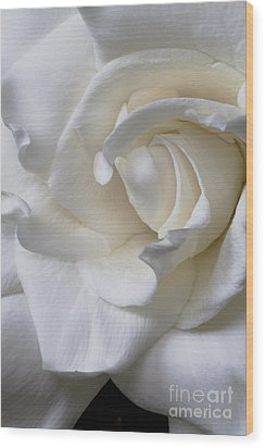 Purity All Profits Go To Hospice Of The Calumet Area Wood Print
