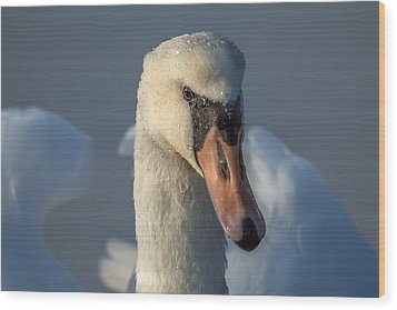 Wood Print featuring the photograph Purity In The Eyes by Rose-Maries Pictures