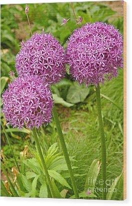 Purple Allium In Manhattan Wood Print by Anna Lisa Yoder