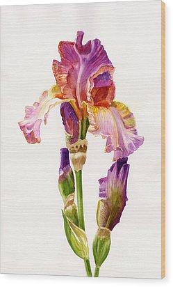 Purple And Orange Iris Wood Print by Sharon Freeman