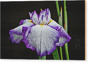 Purple And White Iris Wood Print by Linda Brown