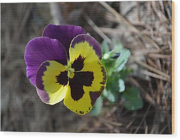 Wood Print featuring the photograph Purple And Yellow Pansy by Tara Potts