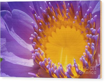 Purple And Yellow Water Lily Close Up Wood Print