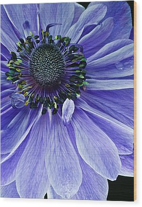 Wood Print featuring the photograph Purple Anemone by Art Barker