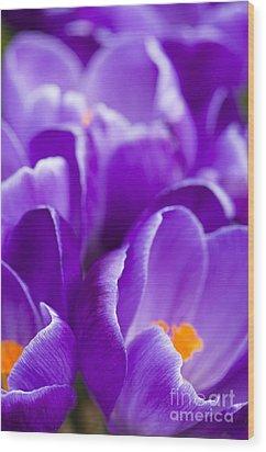 Purple Wood Print by Anne Gilbert