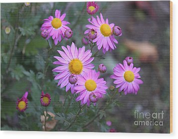 Purple Asters Wood Print by Lena Auxier
