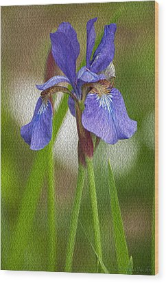 Purple Bearded Iris Oil Wood Print by Brenda Jacobs