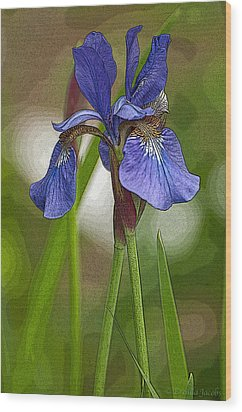 Purple Bearded Iris Watercolor With Pen Wood Print by Brenda Jacobs
