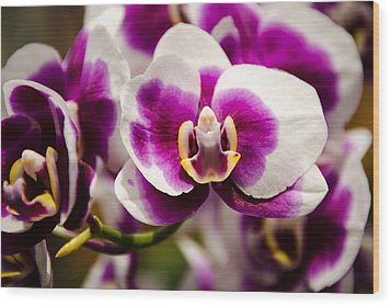 Purple Beauty Wood Print by Penny Lisowski