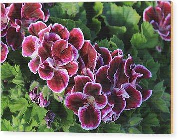 Purple Blooms On A Field Of Green Wood Print