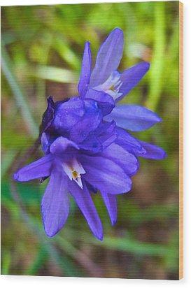 Purple Blue Dicks In Park Sierra-ca Wood Print by Ruth Hager