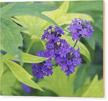 Wood Print featuring the photograph Purple Bunch  by Haleh Mahbod