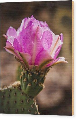 Purple Cactus Flower Wood Print by  Onyonet  Photo Studios