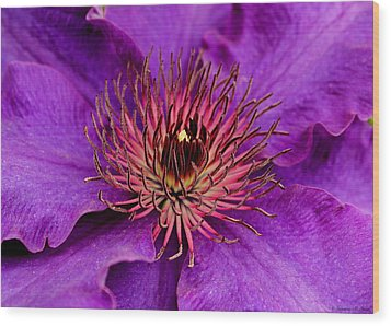 Wood Print featuring the photograph Purple Clematis by Suzanne Stout