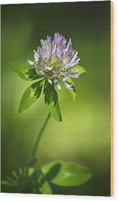 Purple Clover Flower Wood Print by Christina Rollo