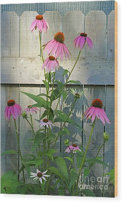 Wood Print featuring the photograph Purple Coneflower by Steve Augustin
