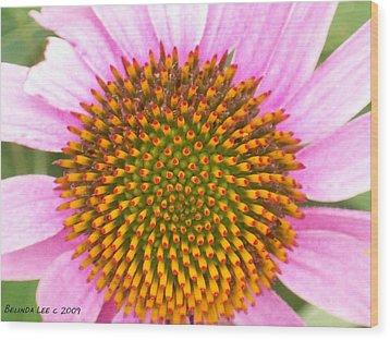 Purple Conehead Closeup Wood Print by Belinda Lee