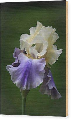 Purple Cream Bearded Iris Wood Print by Patti Deters