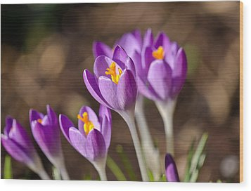 Purple Crocus Wood Print
