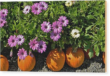 Purple Daisies And A Touch Of Orange Wood Print