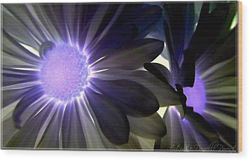 Purple Daisies Negative Effects Wood Print by Danielle  Parent