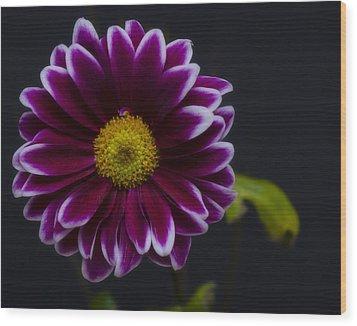Purple Daisy Wood Print by Dennis Reagan
