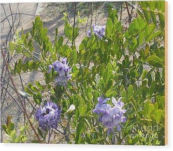 Purple Desert Flowers Wood Print