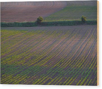 Purple Fields Wood Print by Evelyn Tambour